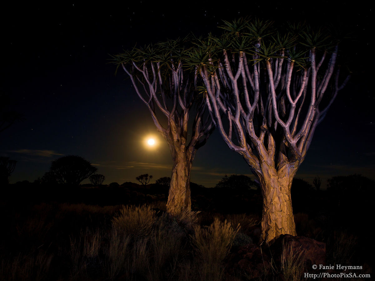 Quivertree Moon Scape