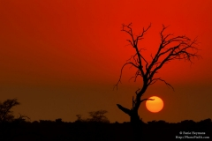 Sunrise in the Kgalagadi Northern Cape Africa