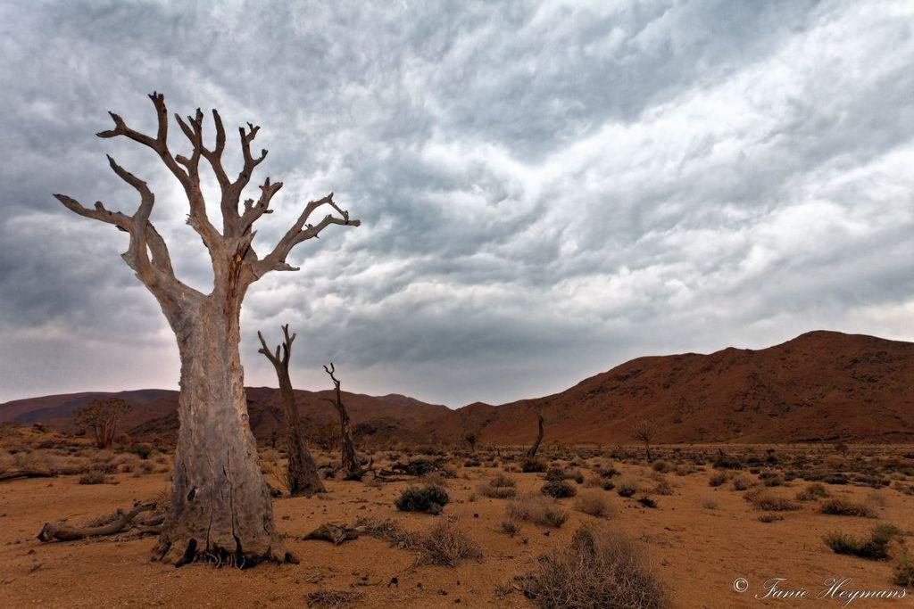 dead-quiver-trees-in-the-desert-mountains-1024x683.jpg